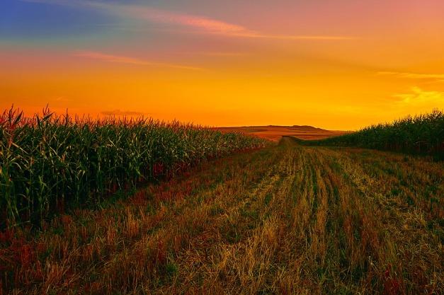 corn-1908474_960_720